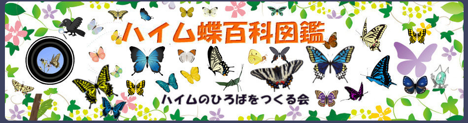 https://butterfly.heimnohiroba.com/